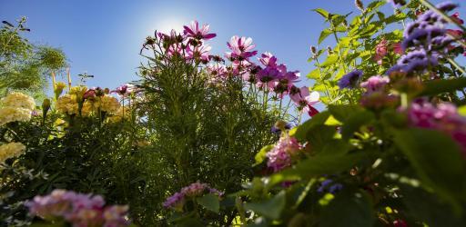Dans le jardin des fleurs