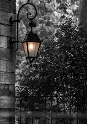 Lumière du parc